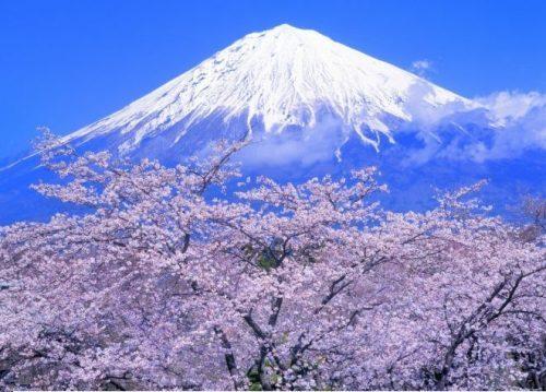 Vào mùa xuân bạn còn được ngắm cả hoa anh đào nở dưới chân núi Phú Sĩ